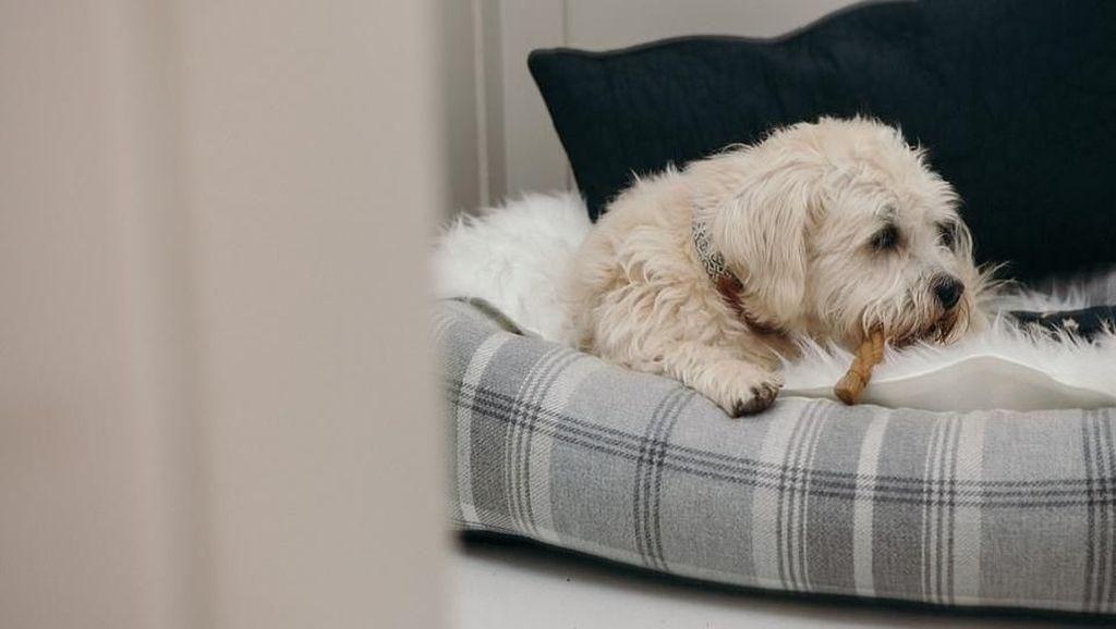 Foto: Hotel Khusus Anjing di Inggris Bikin Iri Wisatawan
