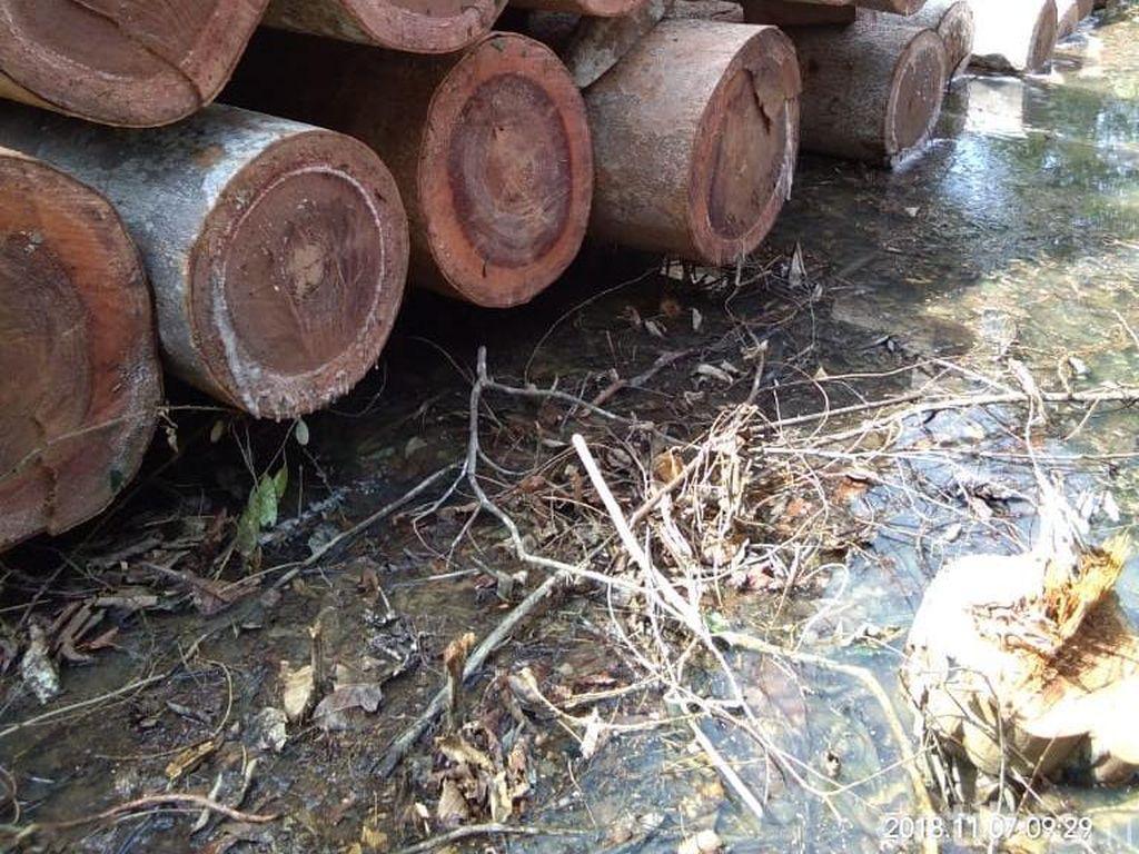 Melihat Ganasnya Pembabatan Hutan di Riau