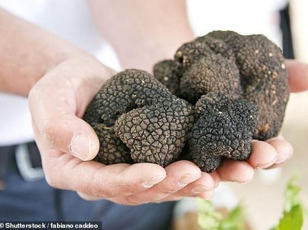 Kabar Buruk! Jamur Truffle Akan Punah Karena Perubahan Cuaca