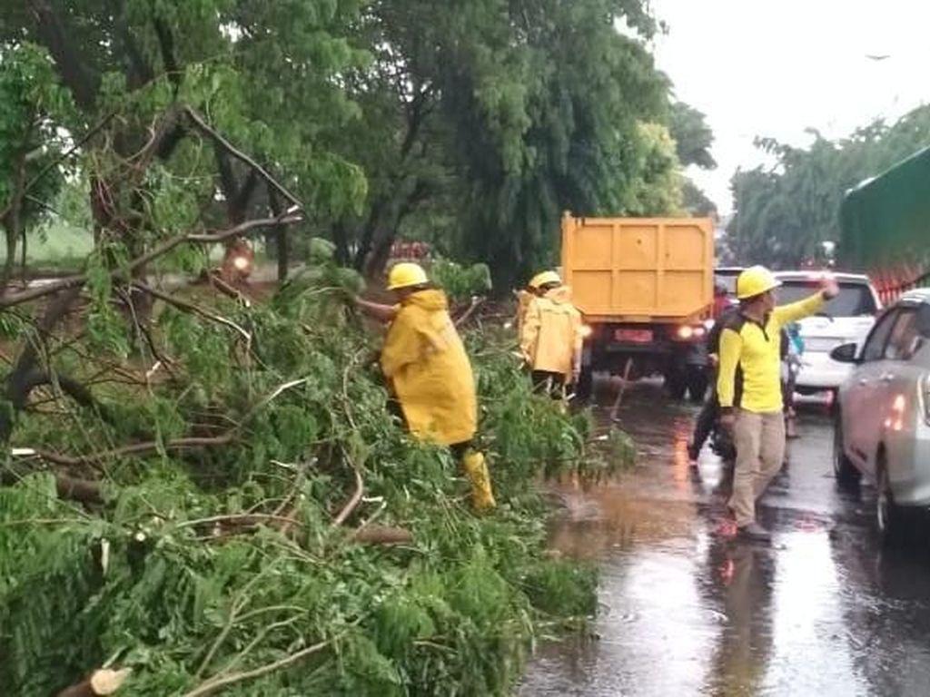 Pohon Tumbang di Jaktim, Lalin Arah Klender Tersendat