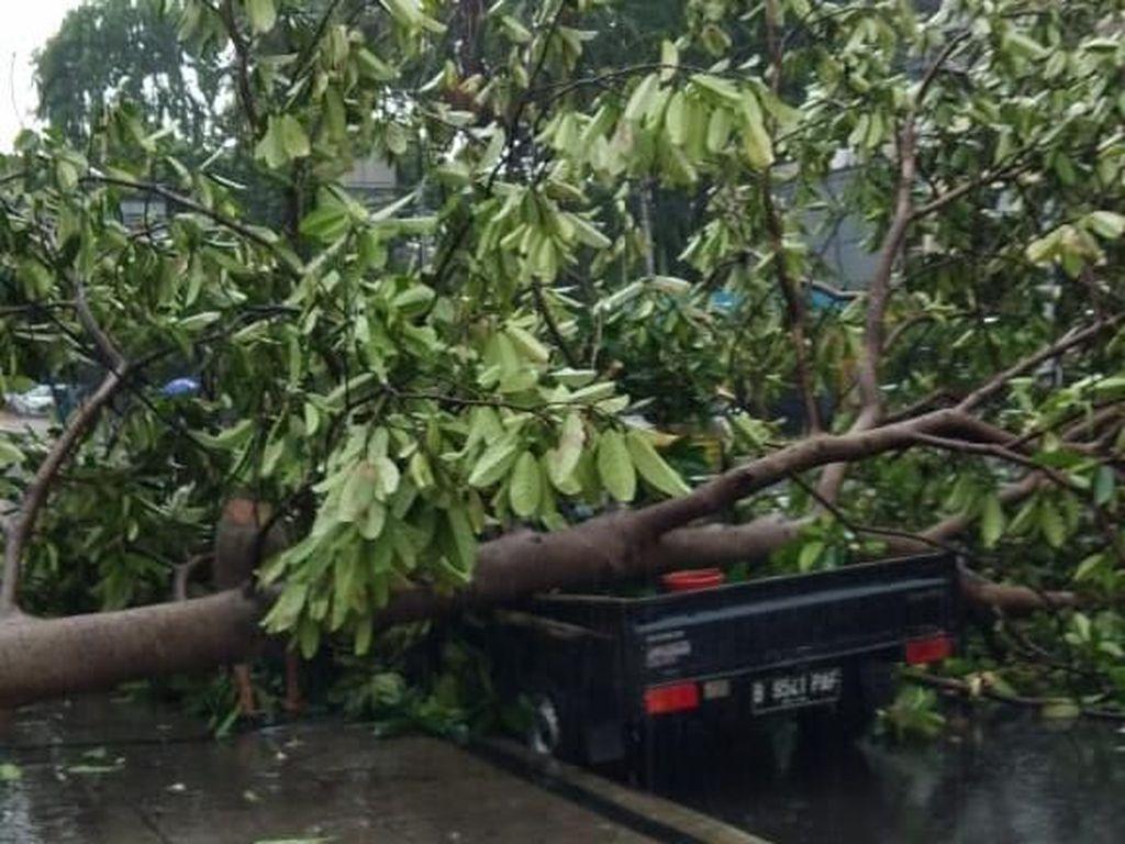 Pohon Tumbang di Depan Kantor Bawaslu Timpa Mobil, Lalin Macet