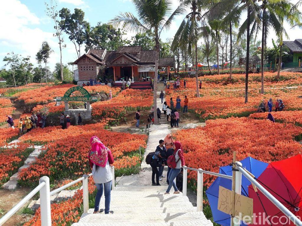 Foto: Kebun Bunga yang Paling Dicari Orang di Gunungkidul