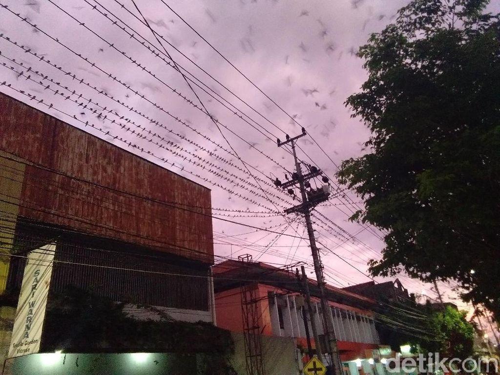 Burung Layang-layang Asia Migrasi ke Yogya, Pemkot Siapkan Ini