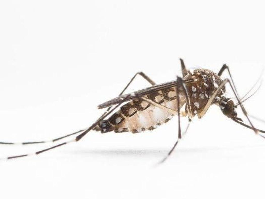 Ilmuwan Temukan Gen Kenapa Nyamuk Suka Mengigit Orang Tertentu