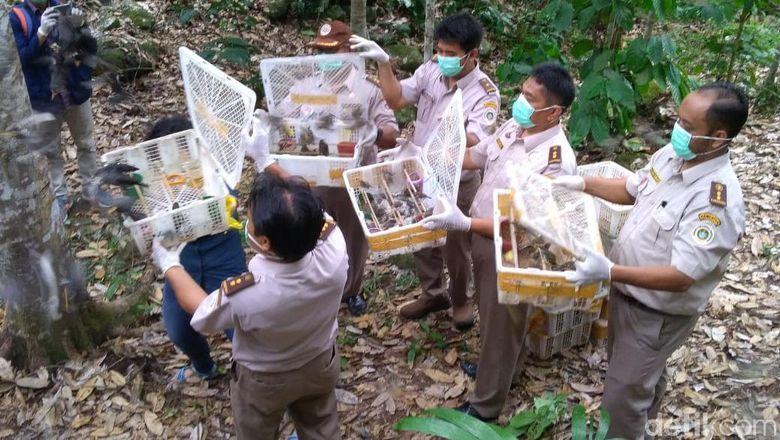 1.536 Burung yang Hendak Diselundupkan Diamankan di Bakauheni