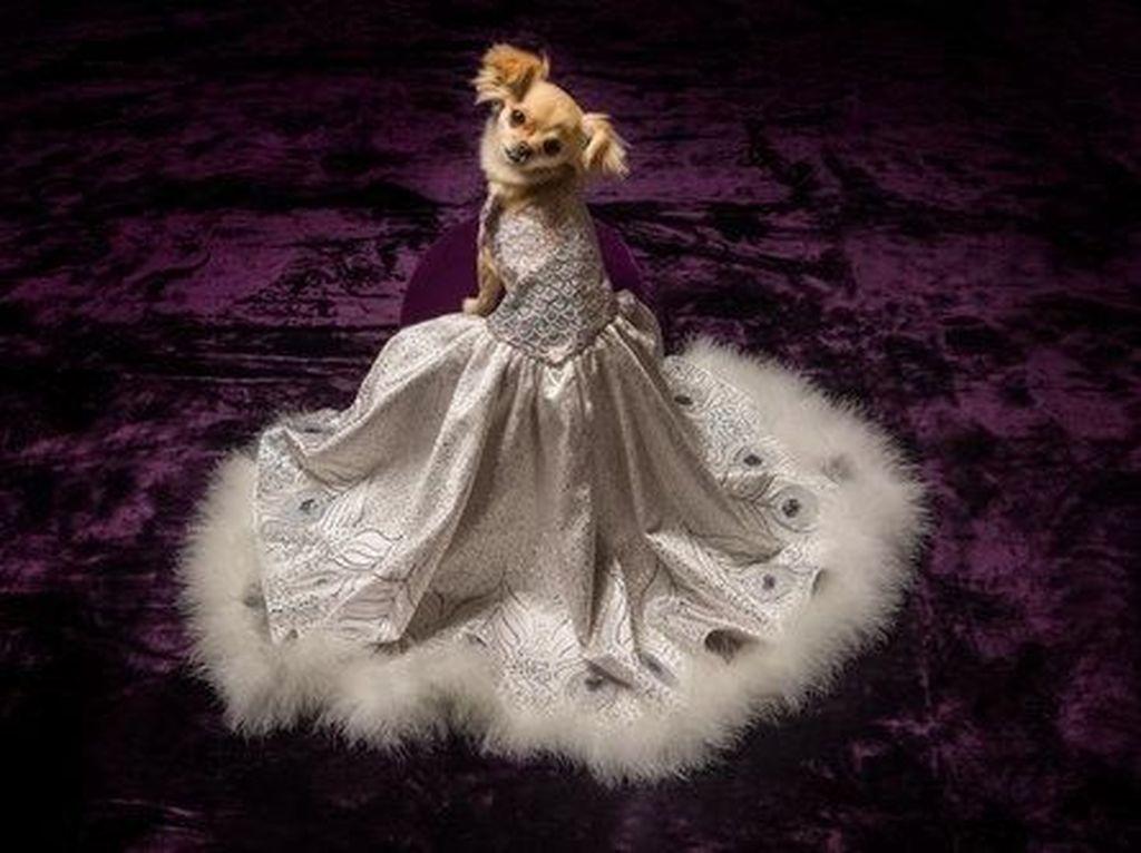 Baju untuk Anjing Ini Dijual Rp 745 Juta, Lebih Mahal dari Gaun Pernikahanmu