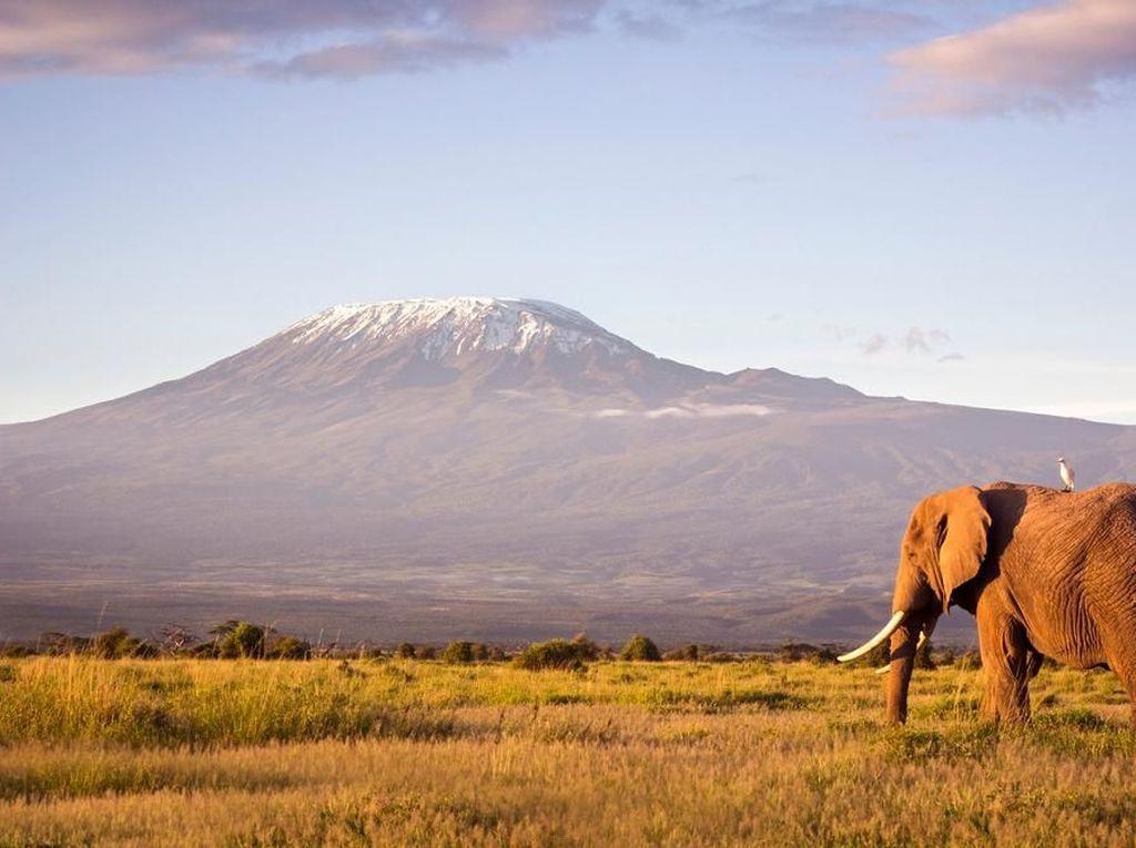 Es Abadi Gunung Kilimanjaro Perlahan Menghilang