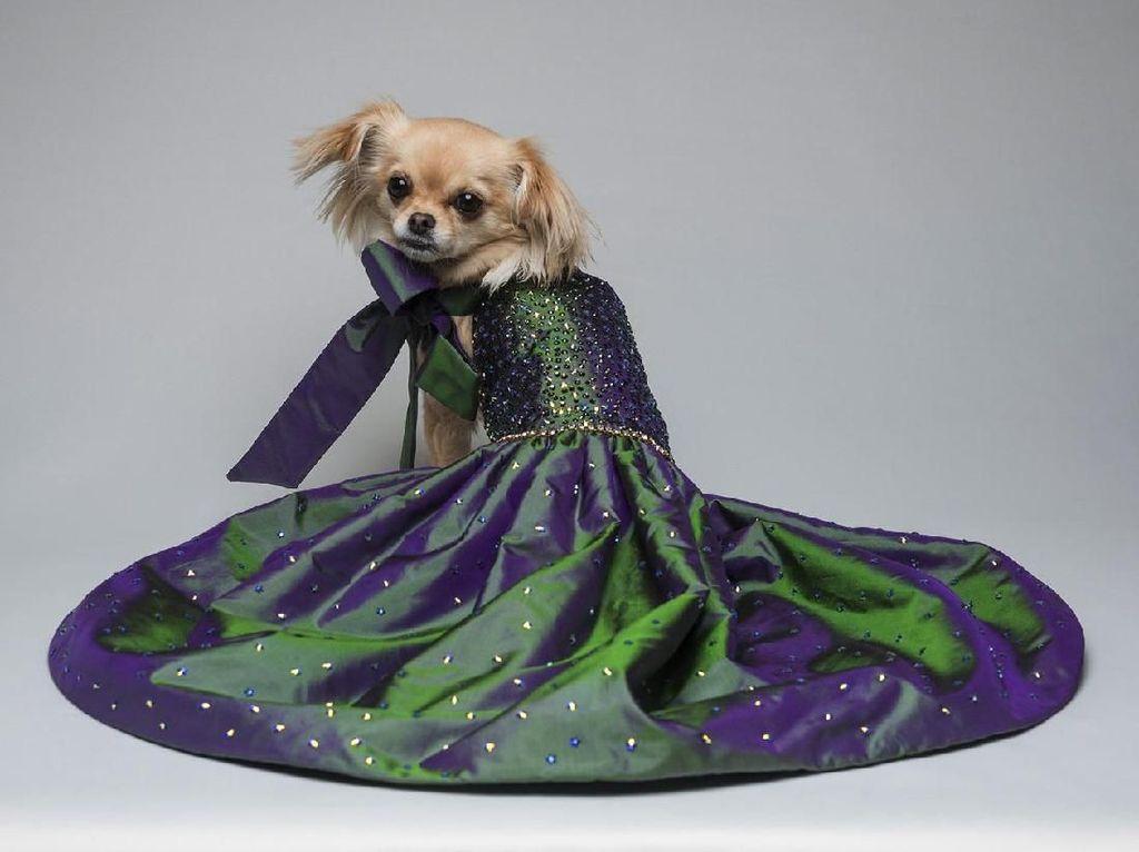 Foto: Deretan Gaun Mewah untuk Anjing yang Harganya Setara Rumah