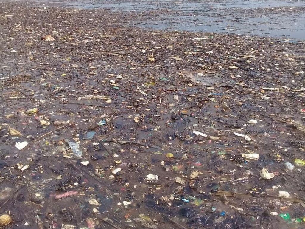 Penyu Pulau Pari Mati, Walhi: Setop Aliran Sampah DKI ke Laut!
