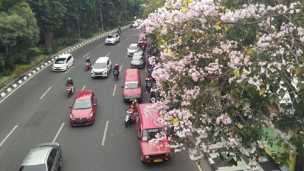 Foto: Saat Jalanan Surabaya Serasa Seperti di Jepang