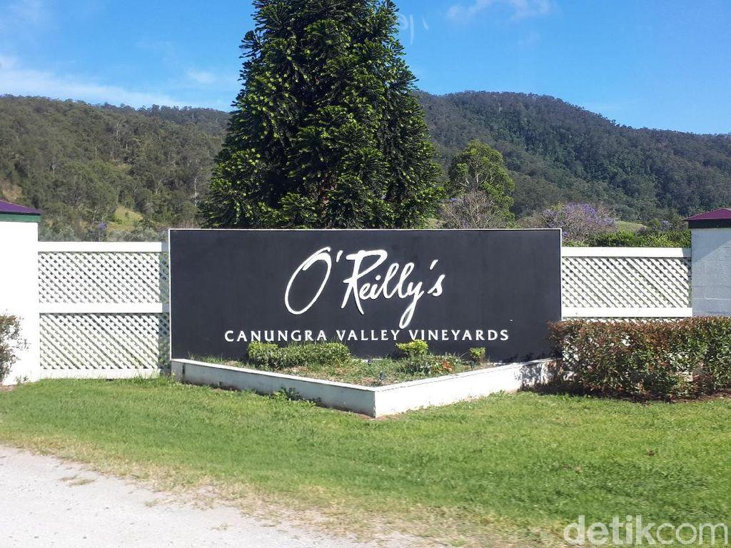 Foto: Tempat Sarapan Paling Indah di Kebun Anggur Australia