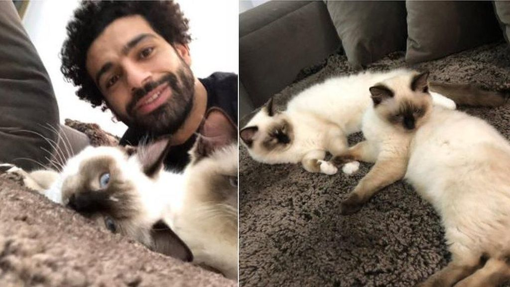 Mo Salah Kecam Keras Rencana Mesir Mengekspor Anjing dan Kucing