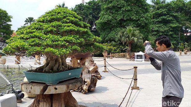 Festival bonsai di halaman kantor Pemkot Surabaya terasa istimewa. Diantara ratusan bonsai yang dipamerkan ada satu yang harganya mencapai Rp 1 miliar lho.