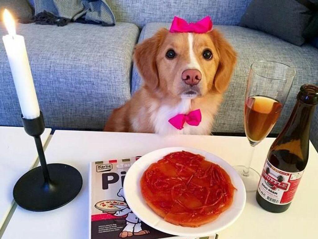 Lucunya Moxie, Anjing Pintar yang Doyan Brokoli