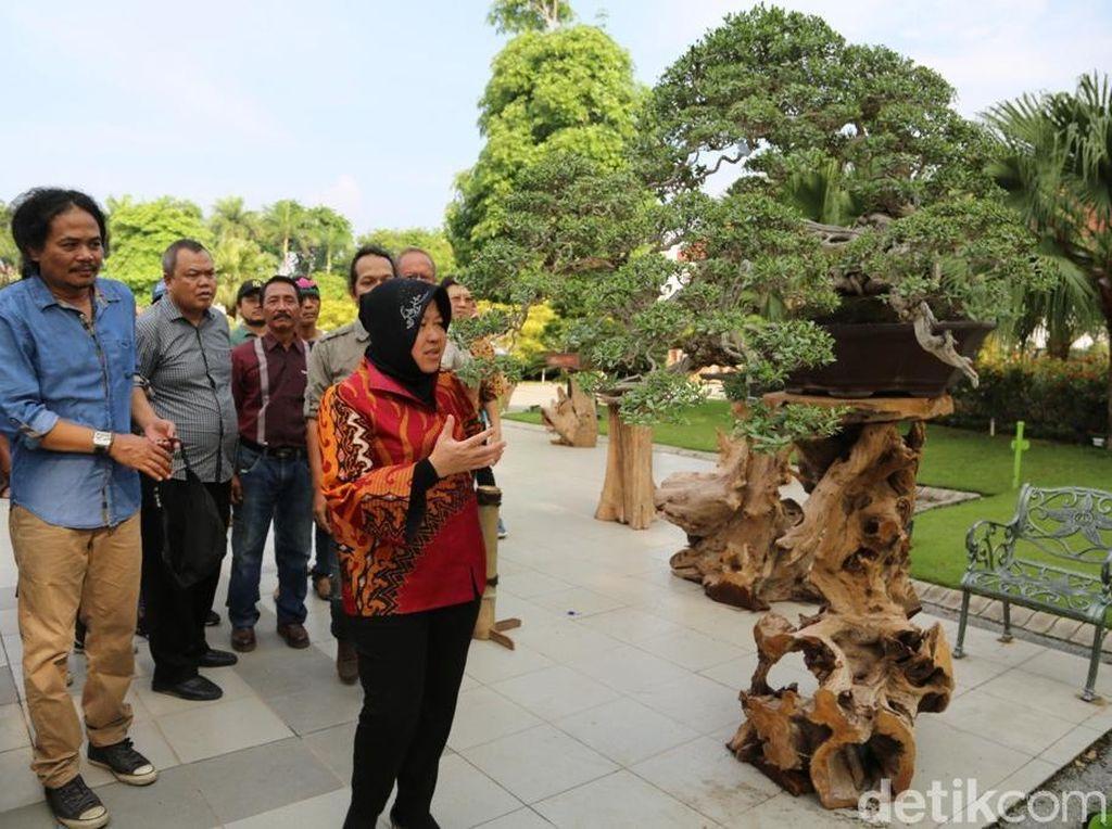 Festival Bonsai Bakal Jadi Agenda Tahunan di Surabaya
