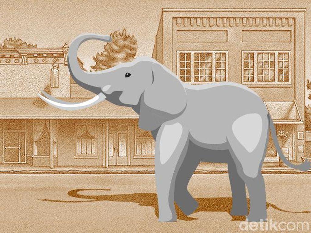 Gajah Liar Ditemukan Mati Membusuk di Aceh dan Gadingnya Hilang