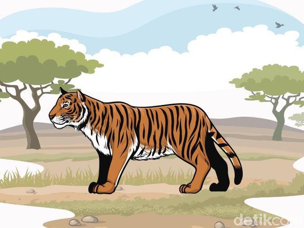 Harimau yang Serang Pekerja HTI di Riau, Diduga Betina dan 2 Anaknya