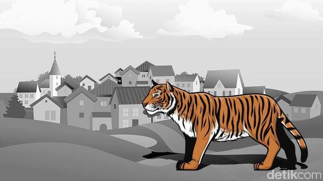 Harimau Dilaporkan Masuk ke Permukiman Warga di Sijunjung Sumbar