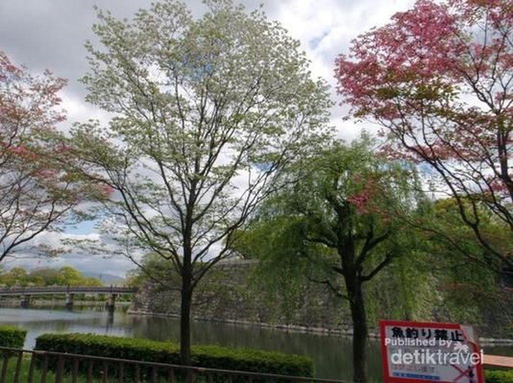 Melihat Sakura yang Mekar Belakangan