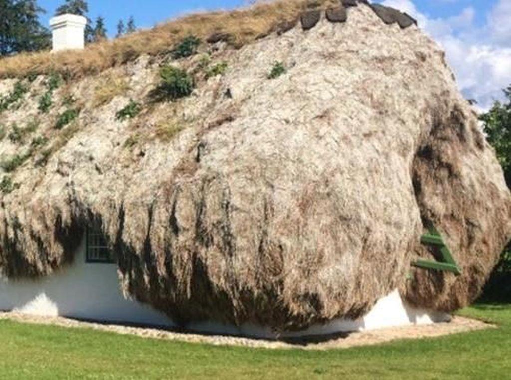 Aneh, Rumah Ini Pakai Tumpukan Rumput Laut untuk Jadi Atap