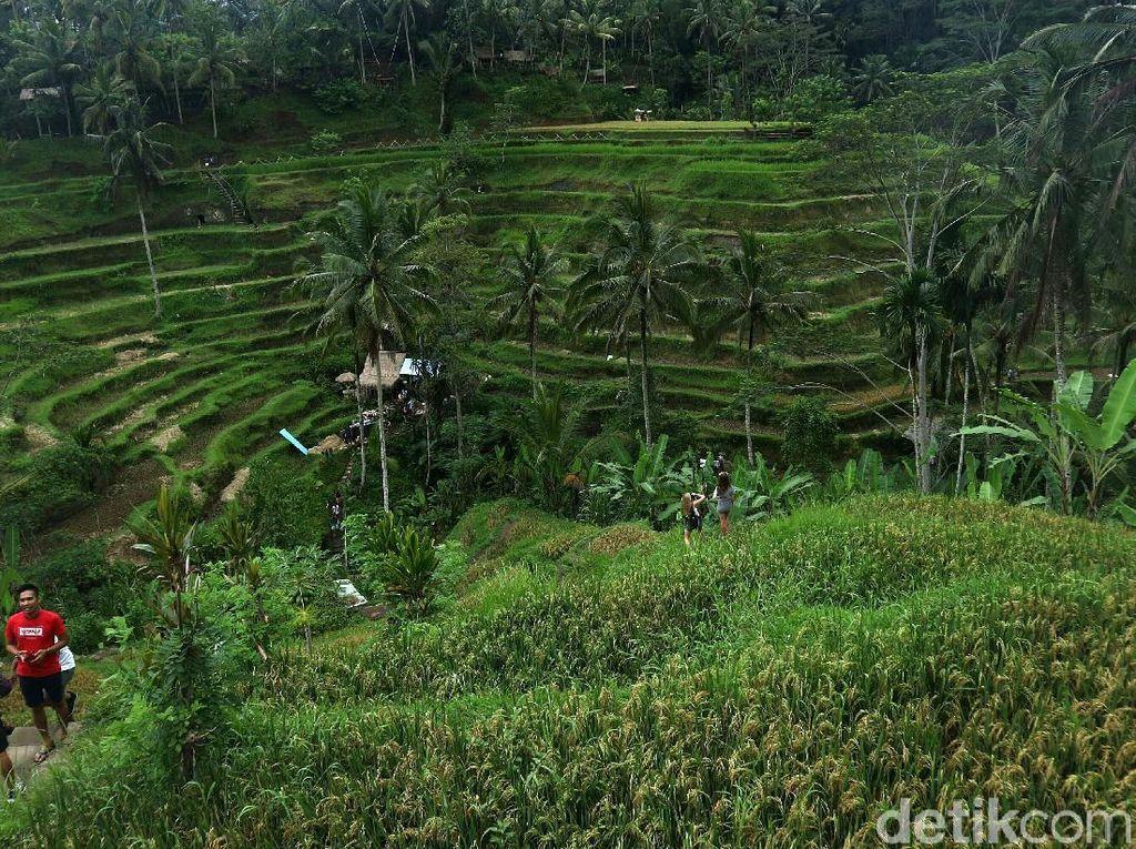 Mengungkap Sejarah Subak Bali