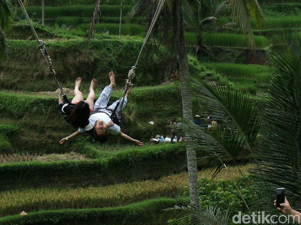 Serunya Bermain Ayunan di Tegalalang Bali