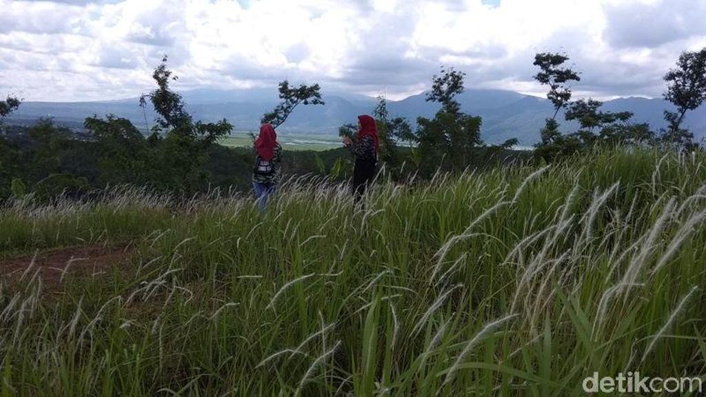 Foto: Padang Ilalang yang Viral Ini Diserbu Turis