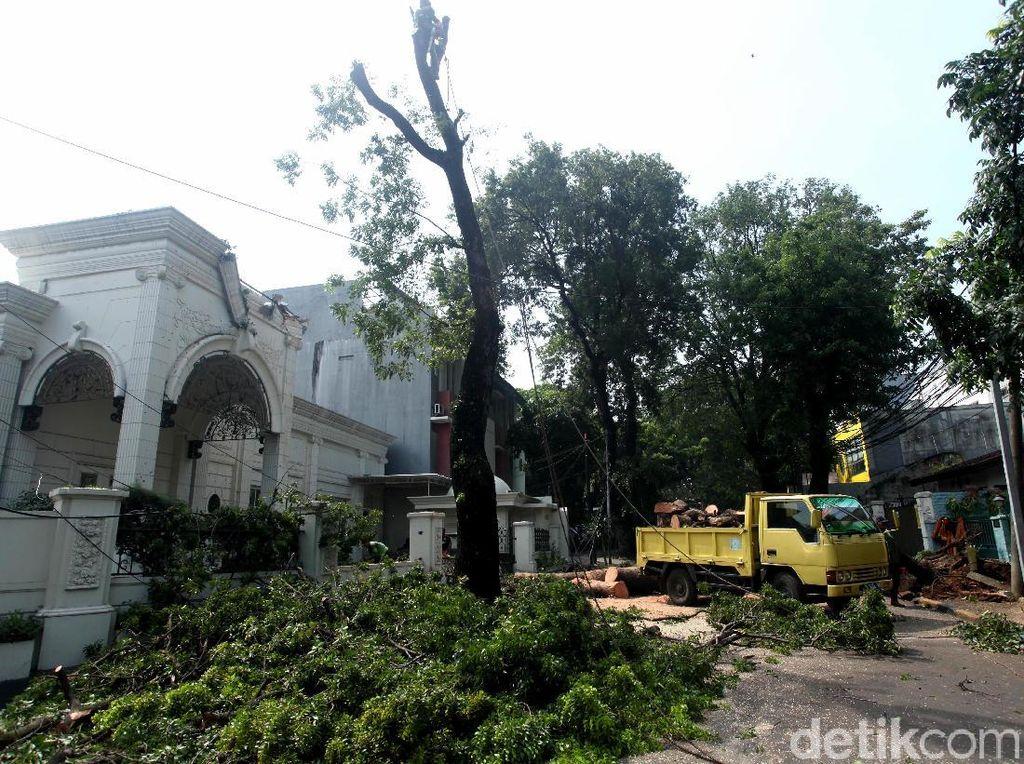 Pohon Tumbang di Panglima Polim Dievakuasi