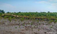 Nelayan Karawang Tanam Mangrove Langka di Pantai Pasir Putih