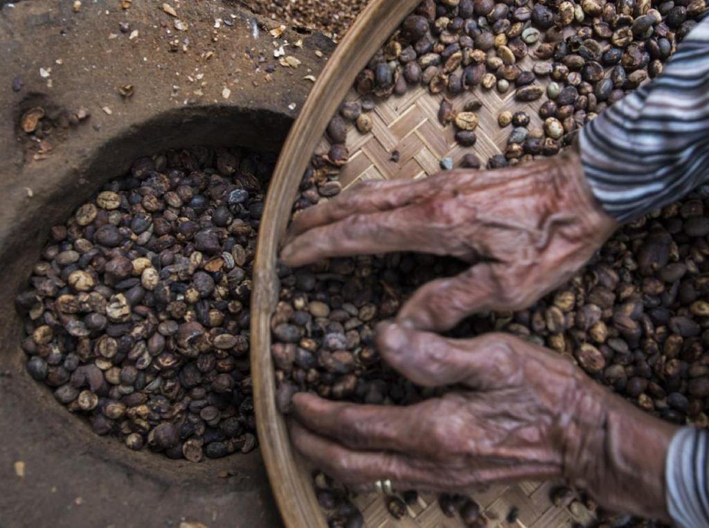 Mesir Minati Kopi RI, Nilai Perdagangan Bisa Capai Rp 8,4 Miliar