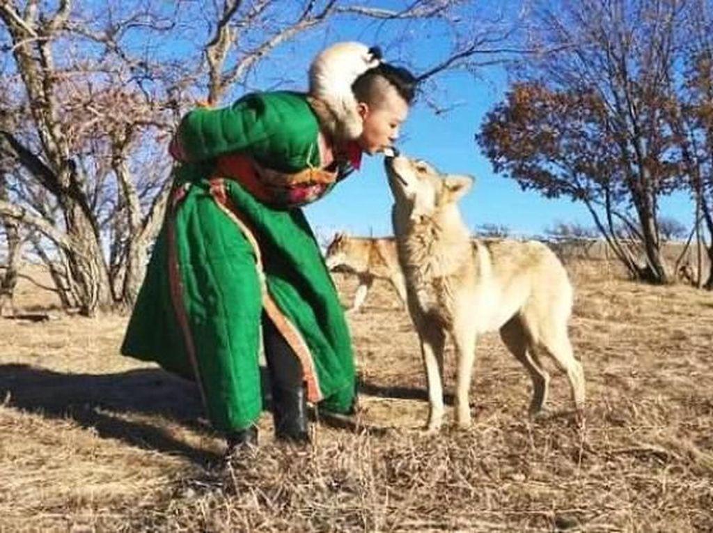 Hii..! Wanita Ini Beri Makan Kawanan Serigala Langsung Lewat Mulutnya