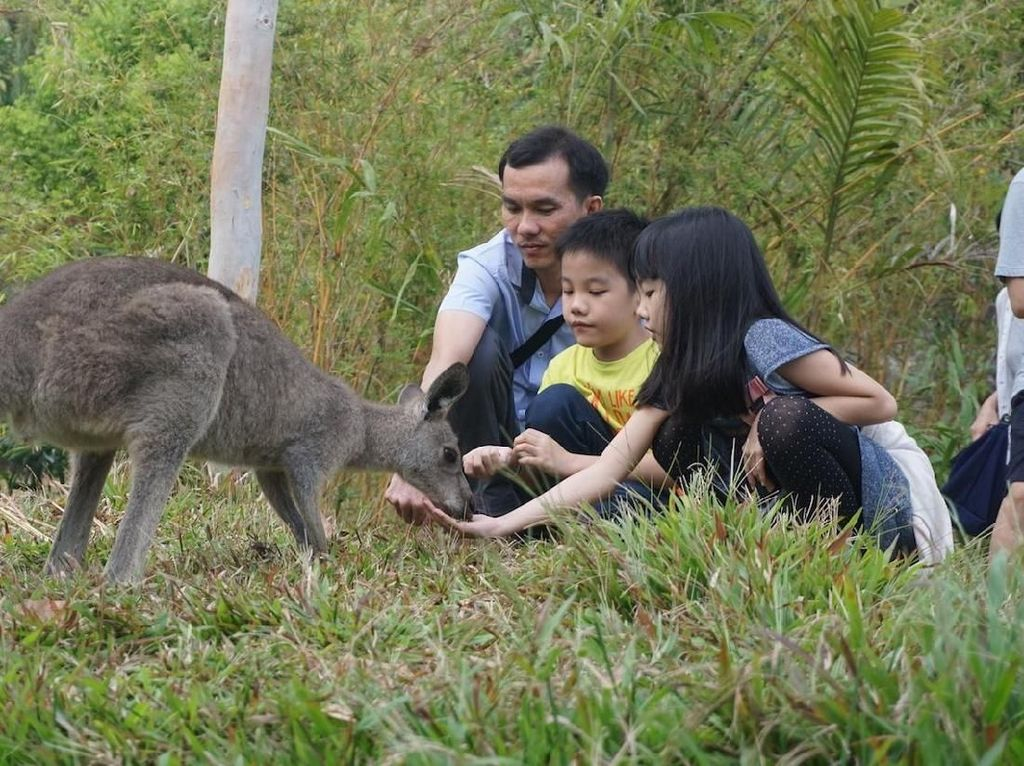 Liburan Tahun Baru di Jatim Yuk, Lihat Wombat hingga Kanguru