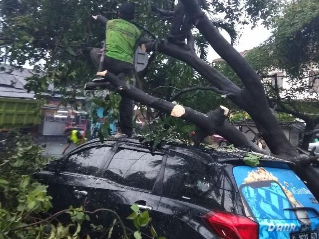 Diterjang Hujan dan Angin Kencang, 27 Pohon di Jakbar Tumbang
