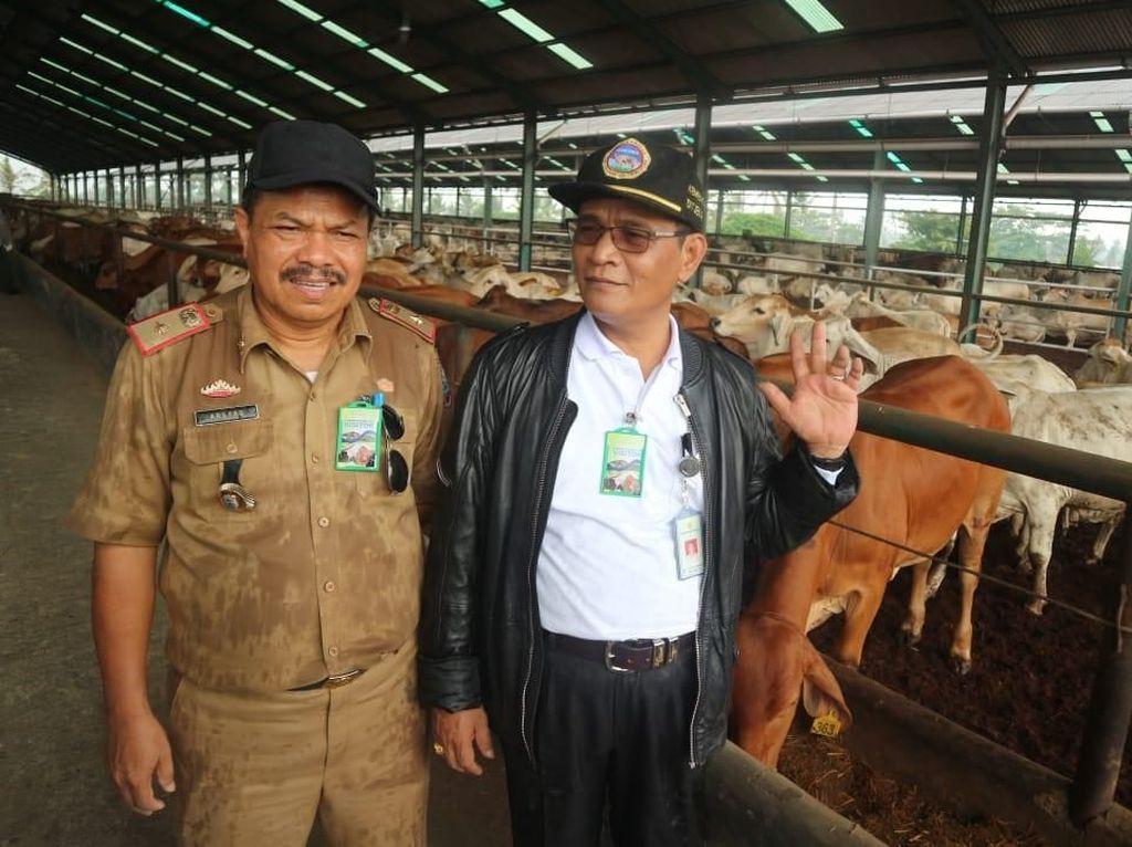 1.430 Indukan Sapi Australia Disalurkan ke 10 Provinsi di Sumatera