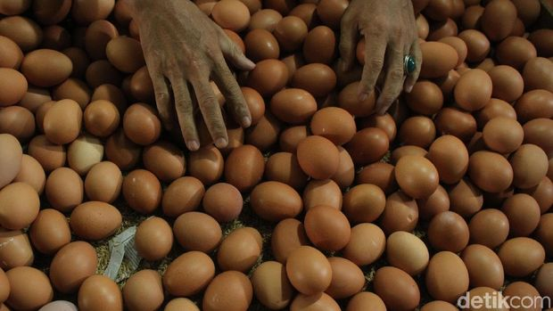 Ilustrasi ibu hamil makan telur