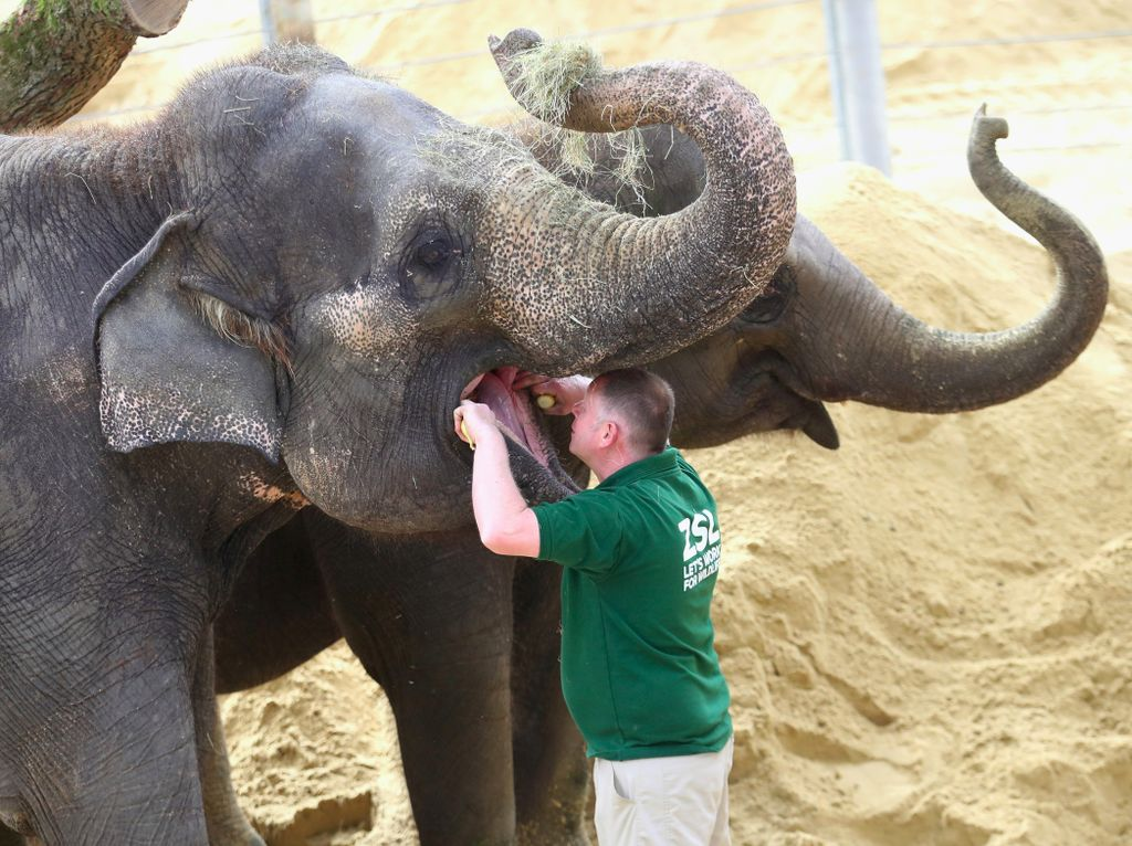 Foto: Ketika Gajah dan Hewan Lainnya ke Dokter Gigi