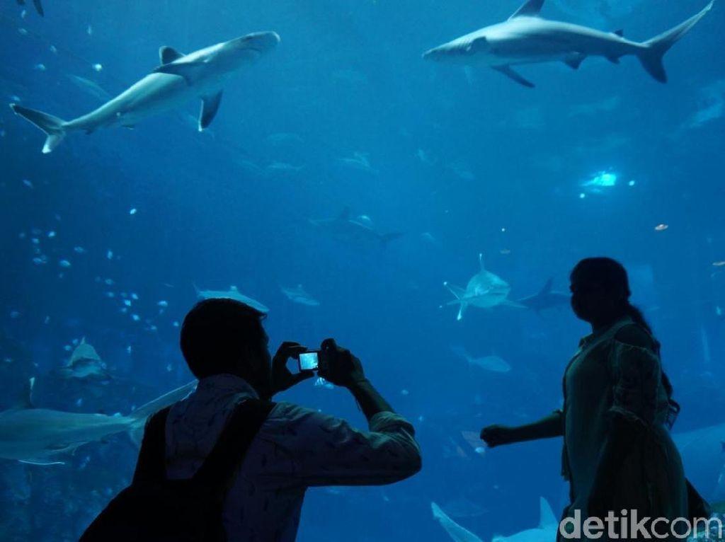 Foto: Singapura Memindahkan Dunia Bawah Laut ke Daratan
