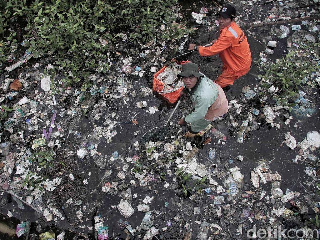 Pasukan Oranye Berjibaku Bersihkan Sampah di Hutan Mangrove