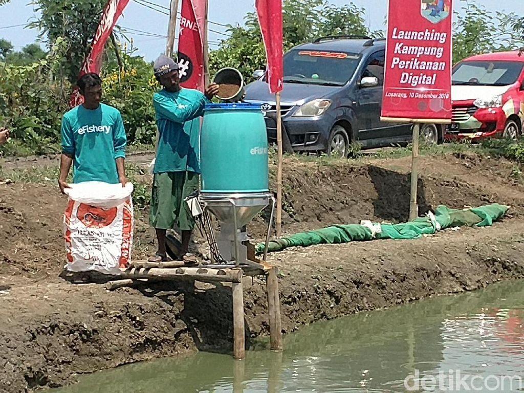 Ekonomi Rontok Kena Dampak Corona, Bagaimana Bisnis Budi Daya Ikan?