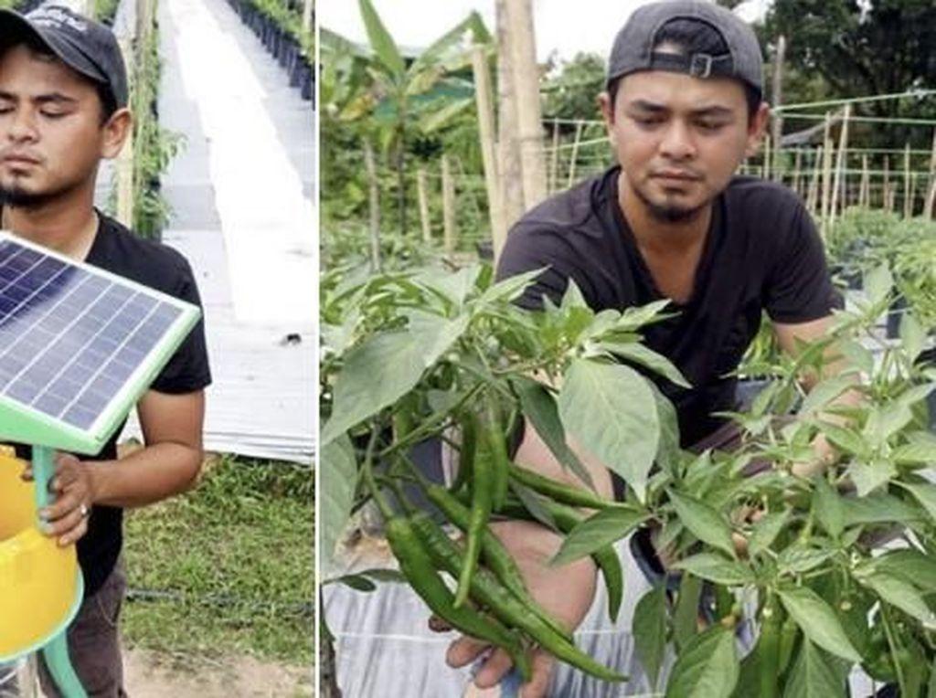 Berhenti Jadi Karyawan, 4 Pria Ini Pilih Jadi Petani Cabai