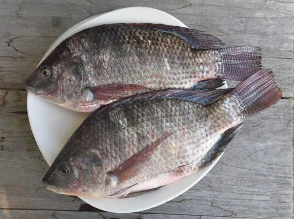 Kalah Bersaing dengan Mujair, Ikan Asli Papua Makin Langka