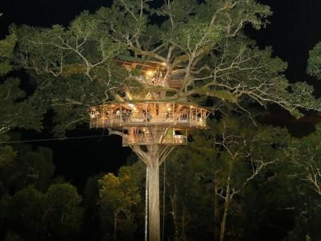 Potret Rumah Pohon Tertinggi Dunia Vs Illegal Logging