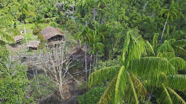 Foto: Rumah pohon Suku Korowai, Papua (iStock)