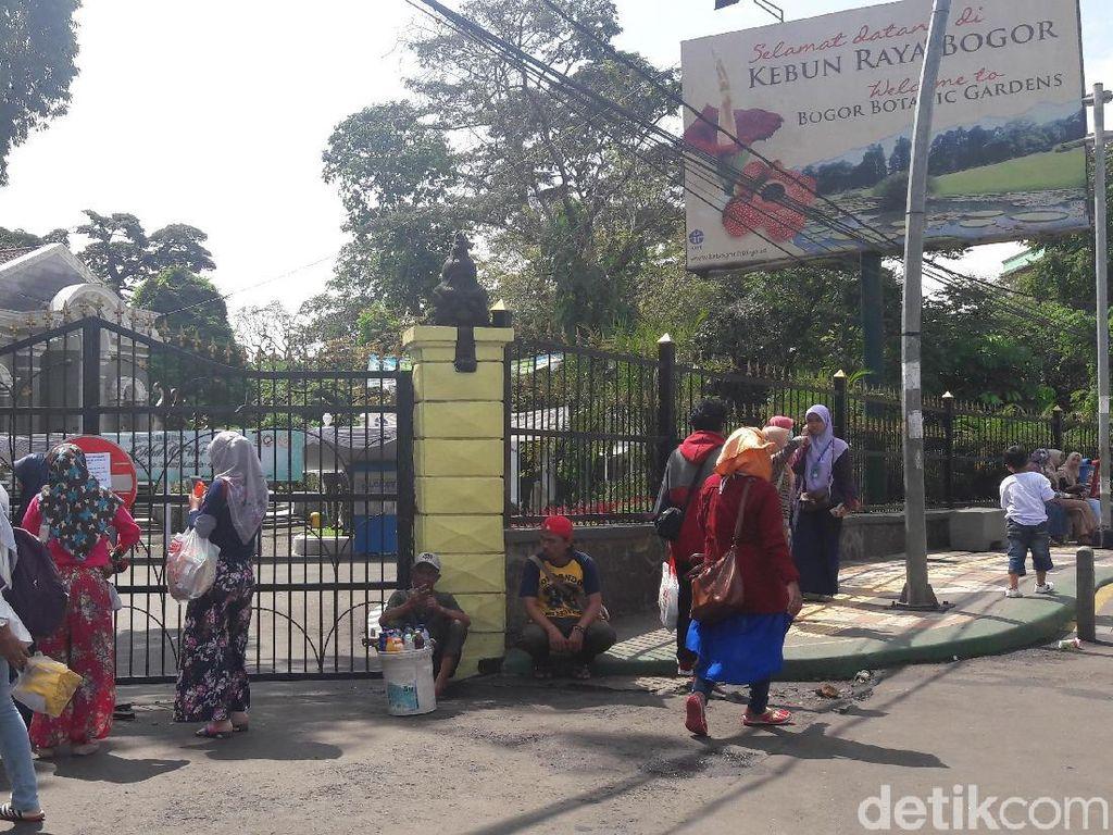 Pohon-pohon Tumbang Diterpa Angin, Kebun Raya Bogor Ditutup