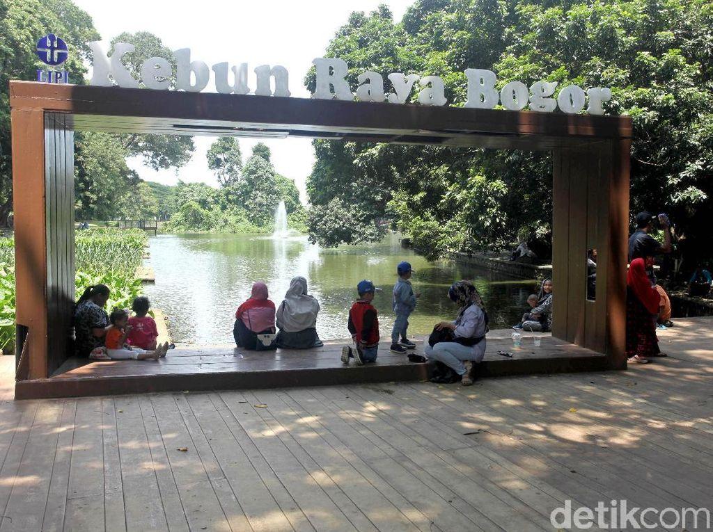 Jalan-jalan ke Kebun Raya Bogor, Apa Saja yang Menarik?