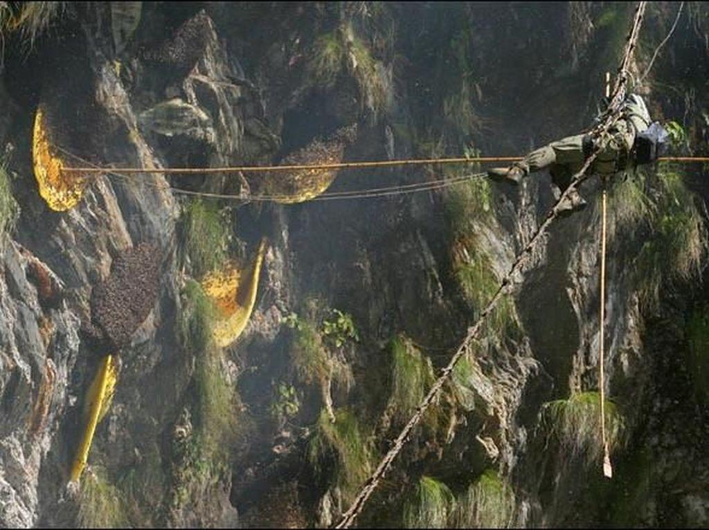 Atraksi Berani Mati Pemburu Madu di Nepal