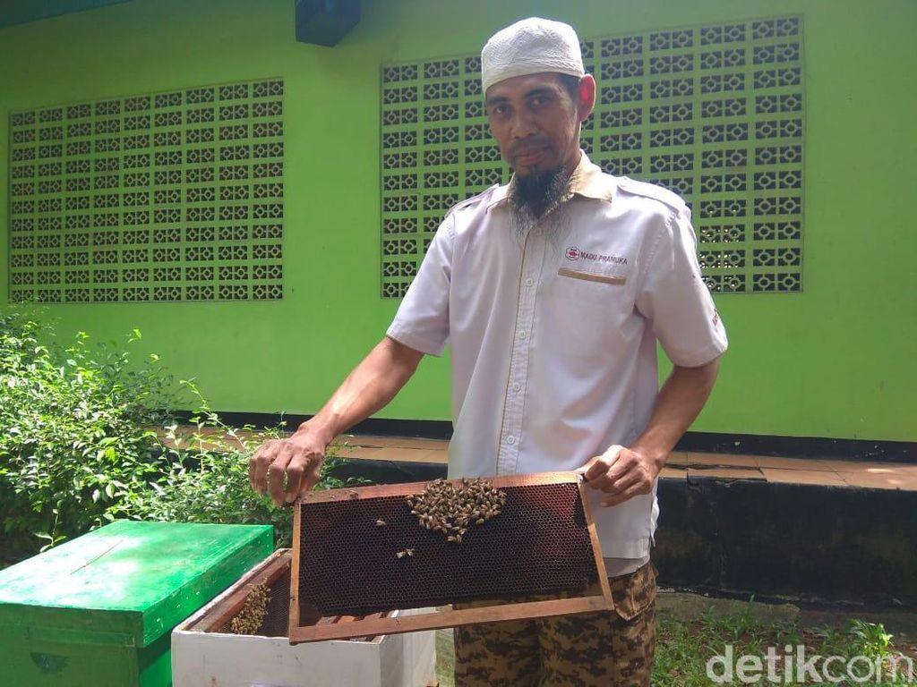 Mau Dientup Lebah Buat Terapi? Kenali Syarat Sampai Efek Sampingnya