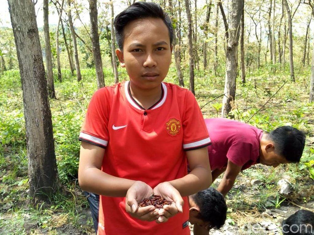 Isi Liburan, Anak-Anak di Ponorogo Berburu Entung