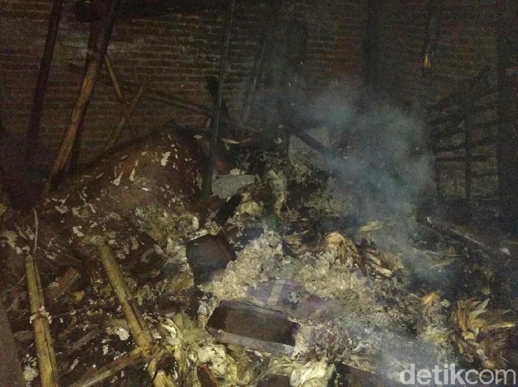 Bakar Sisa Pakan Ternak, Rumah dan 2 Ekor Sapi Hangus Terbakar