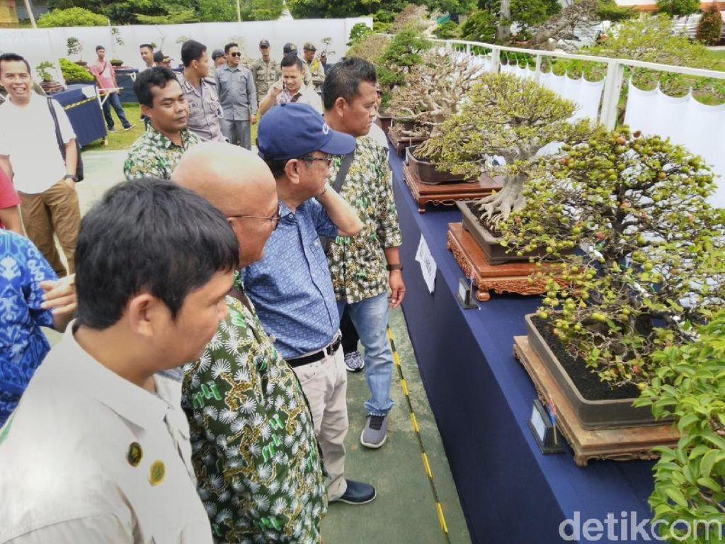 Bonsai Berbuah Ini Menyita Perhatian Warga Ciamis